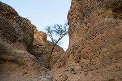 Внутренний каньон на заходе солнца, Sossusvlei Sesriem, Намибия Стоковое фото RF