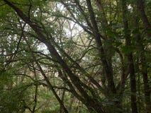 Внутренний лес с летом ветвей и листьев дерева красивым Стоковое Фото