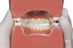 Внутренний рот изолированный на белизне Стоковые Фото