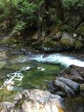 Внутренний тропический лес Стоковое Изображение RF