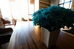 Внутренняя живущая комната с концепцией цветков стоковые изображения