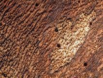 Внутренняя сторона коры дерева стоковые фотографии rf