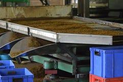 Внутренняя фабрика чая Стоковое Изображение RF