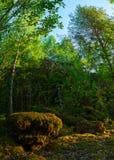 Внутри лета смешанный карельский лес Стоковые Изображения