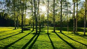 Внушительный ландшафт парка Стоковые Фото