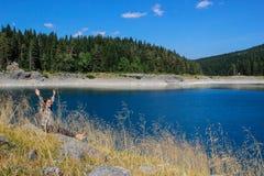 Вода бирюзы озера, соснового леса и гор Оглушать предпосылка с туристом девушки природы сидя на пляже стоковые изображения
