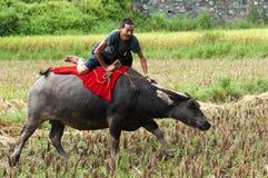 вода буйвола скача Стоковая Фотография RF