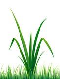 вода вектора травы падений Стоковые Фотографии RF