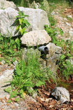 вода весны источника пущи Стоковые Изображения