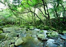 вода весны пущи Стоковое Фото