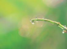 вода ветви Стоковое Фото