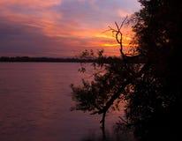 вода восхода солнца ветви moving стоковое изображение rf