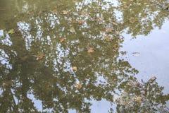 Вода в дождливом дне стоковое фото rf