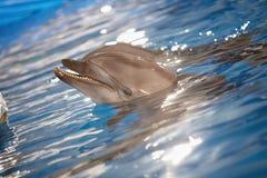вода дельфина Стоковое Фото