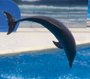 вода дельфина Стоковое Изображение
