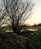 Вода, деревья и поля ландшафта Стоковое Изображение RF