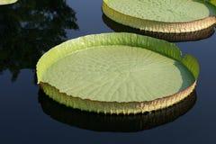 вода диска Стоковая Фотография