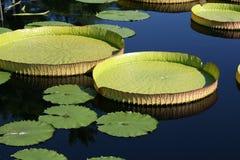 вода диска Стоковые Изображения