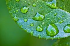 вода дождя листьев падений зеленая Стоковая Фотография RF