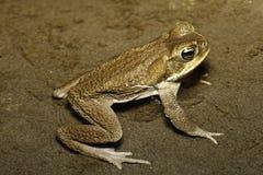 вода жабы дождевого леса тропическая Стоковое фото RF