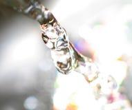 вода жизни Стоковые Изображения