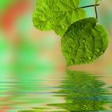вода завода листьев падений Стоковые Изображения