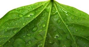 вода завода листьев падений Стоковые Изображения RF