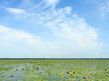 Вода, заводы и красивое облачное небо, Литва Стоковые Изображения RF