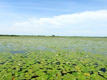 Вода, заводы и красивое облачное небо, Литва Стоковое Изображение RF