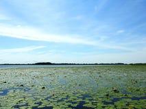 Вода, заводы и красивое облачное небо, Литва Стоковое Изображение