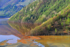 вода загрязнения Стоковое Изображение RF