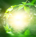 вода зеленого цвета отраженная листьями Стоковые Фотографии RF