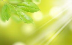 вода зеленых листьев падений естественная Стоковые Фотографии RF