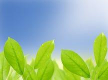 вода зеленых листьев падений естественная Стоковое Изображение RF