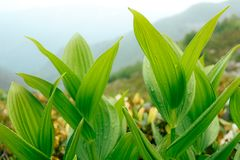 вода зеленых листьев падений тропическая Фото предпосылки крупного плана Стоковые Изображения