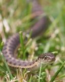 вода змейки Стоковая Фотография RF