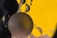 Вода и масло, красивая предпосылка конспекта цвета основанная на белых желтых и черных кругах и овалах, абстракции макроса Стоковые Фотографии RF