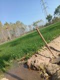 Вода и небольшая пшеница стоковые изображения