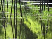 Вода и пуща Стоковые Фотографии RF