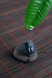 вода камня спы листьев падения зеленая Стоковое Фото