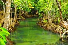 вода корня завода Стоковое фото RF