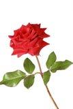 вода красивейших падений красная розовая Стоковые Фотографии RF