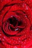 вода красивейших падений предпосылки красная розовая Стоковые Изображения RF