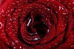 вода красивейших падений предпосылки розовая Стоковое Изображение