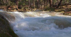 Вода Кристл в реке горы леса Глубоко в горах видеоматериал