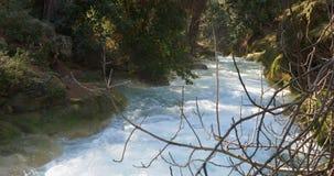 Вода Кристл в реке горы леса Глубоко в горах акции видеоматериалы