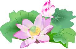 вода лилии бесплатная иллюстрация