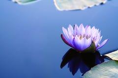 вода лилии copyspace Стоковое Изображение RF