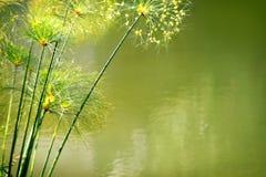 вода листва стоковое изображение rf
