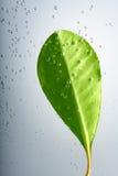 вода листьев воздушных пузырей Стоковое Изображение RF